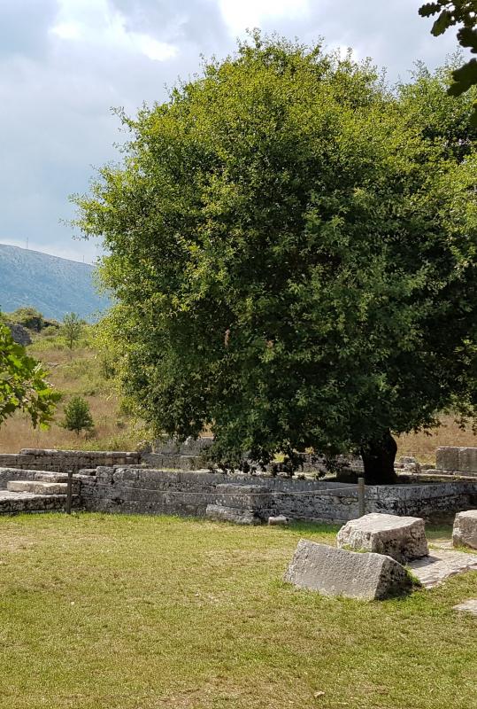 Dodona: in the shade of the sacred oak tree